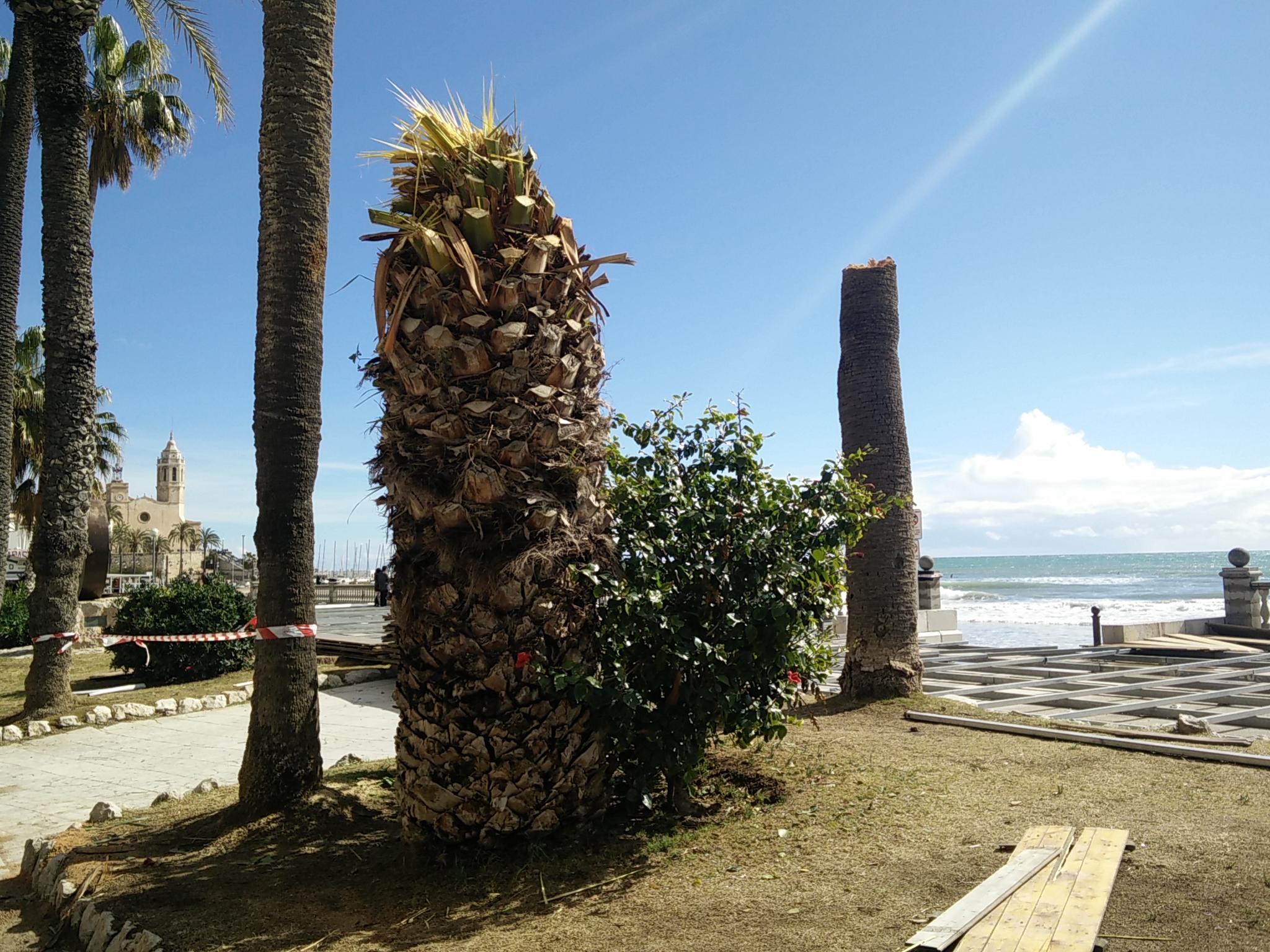 Un cap de fibló s'endú 4 palmeres i 7 fanals a Sitges